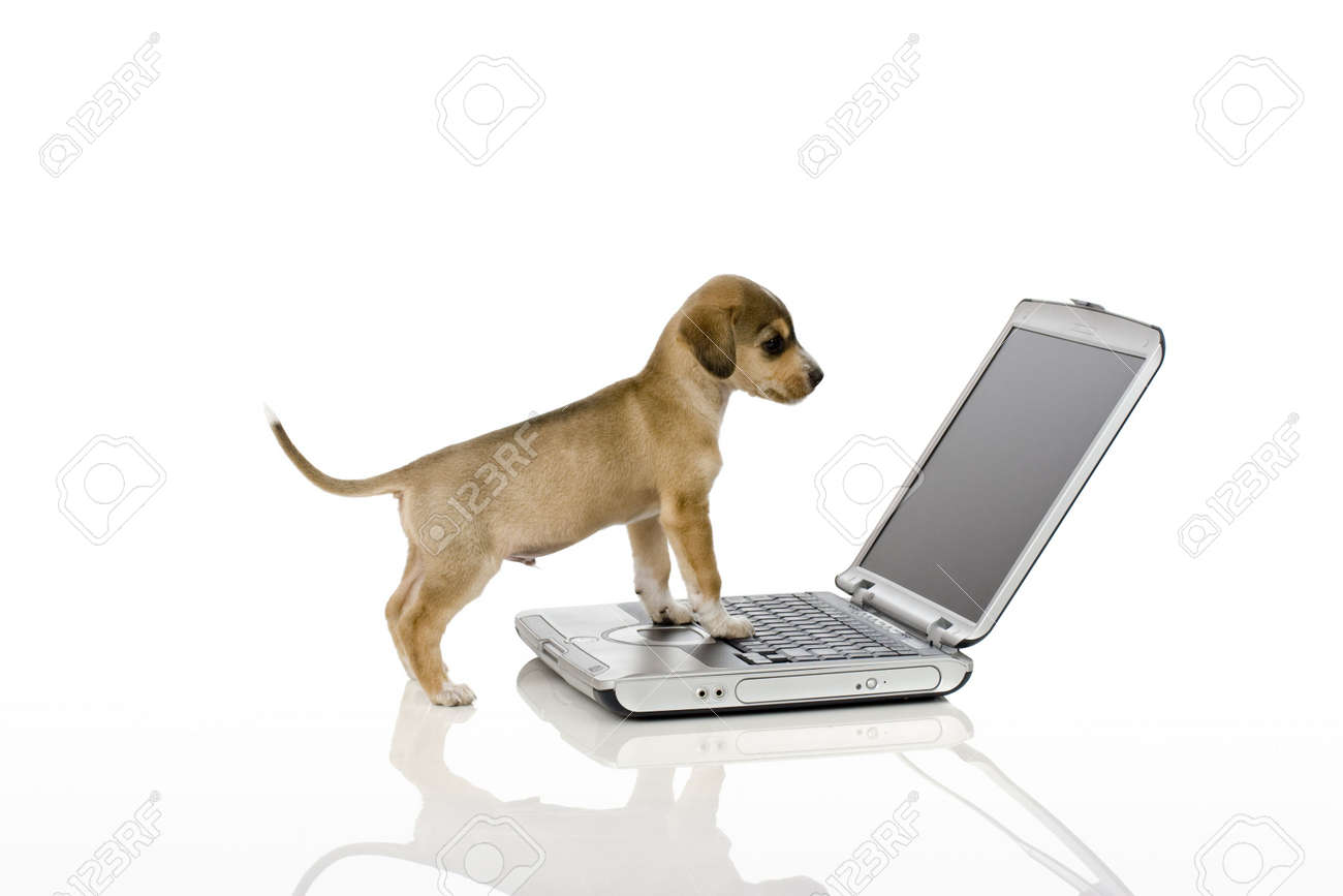 Cute puppy looking at computer screen. Stock Photo - 4304381