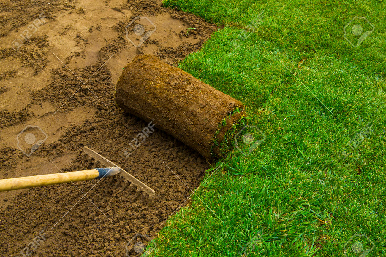 Gardener applying turf rolls in the backyard - 48495584