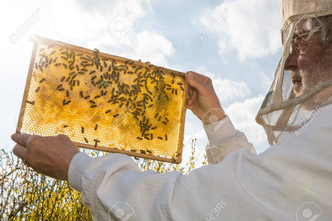 Beekeeper holds frame with honeycomb at bee colonyagainst the sun Stock Photo - 19686484