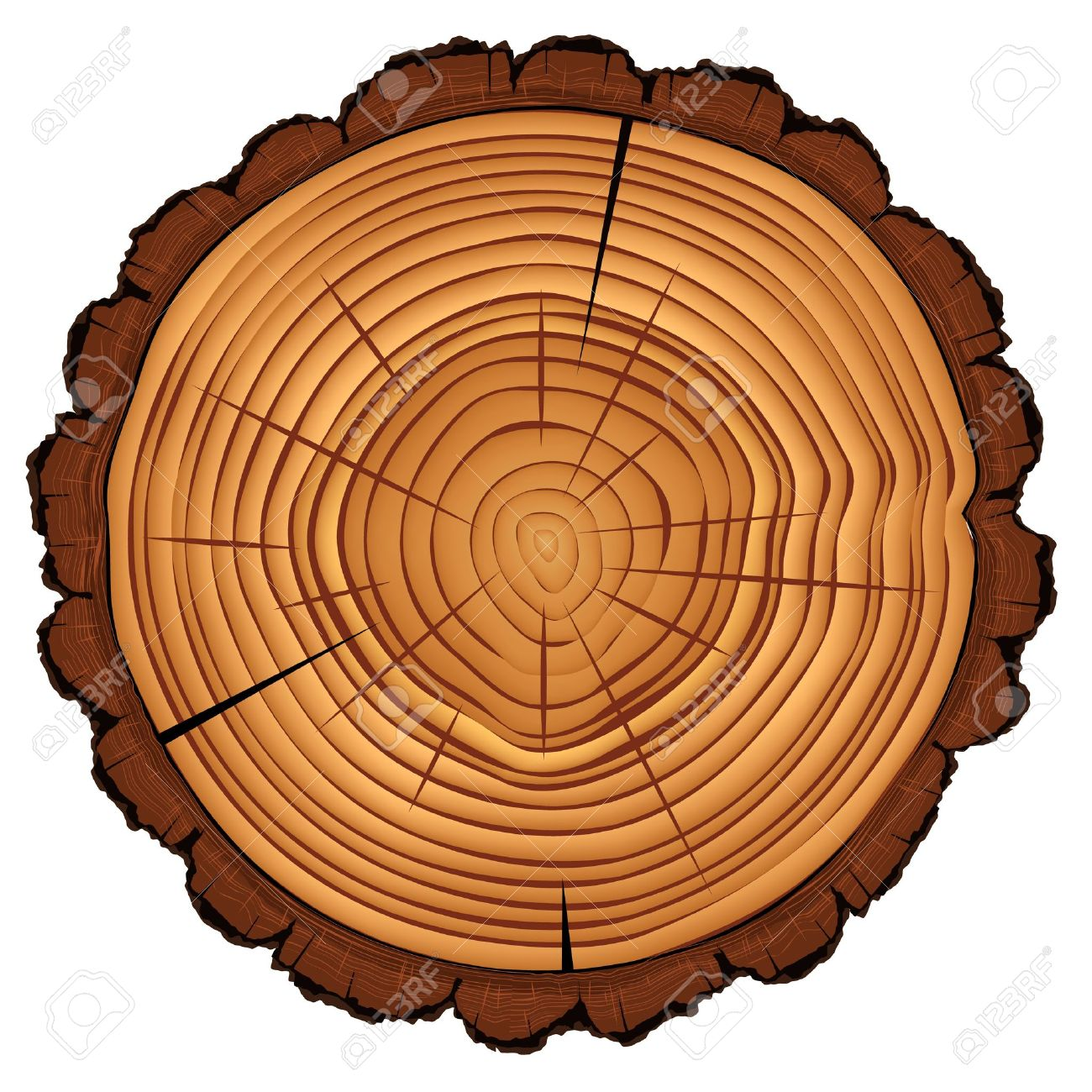 Cross section of tree stump isolated on white - 20198704