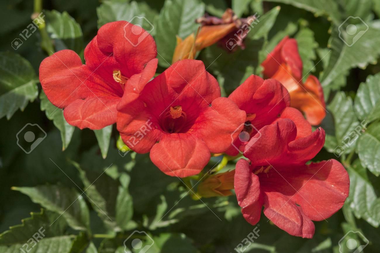 Very beautiful flowers grow near the house on a lawn stock photo stock photo very beautiful flowers grow near the house on a lawn izmirmasajfo