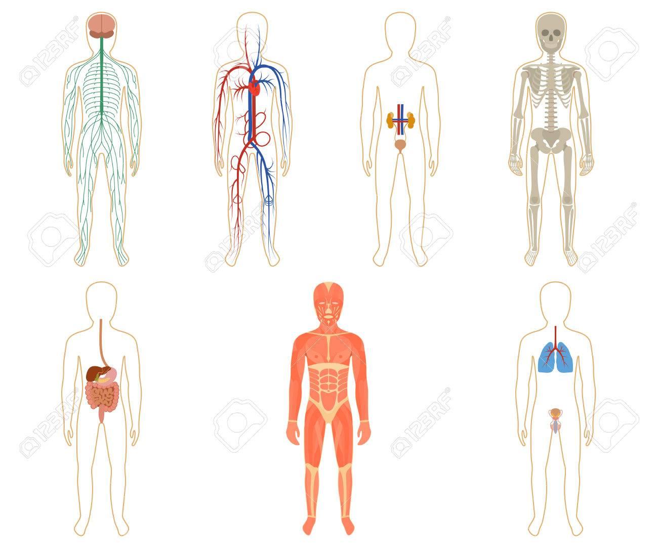 Fantastisch Diagramm Des Menschlichen Körpers Galerie - Menschliche ...