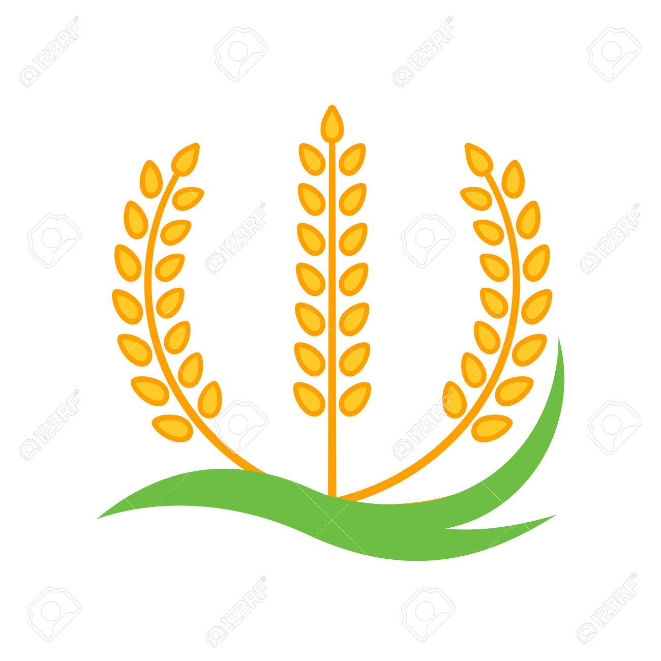 wheat barley spike yellow isolated on white background royalty free rh 123rf com wheat barley vector barley vector logo