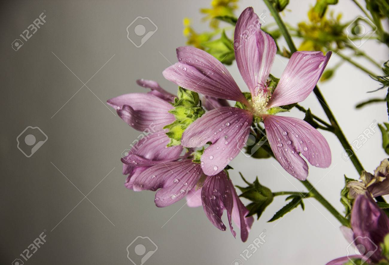 Wild pink flowers steppe plants stock photo picture and royalty stock photo wild pink flowers steppe plants mightylinksfo Image collections