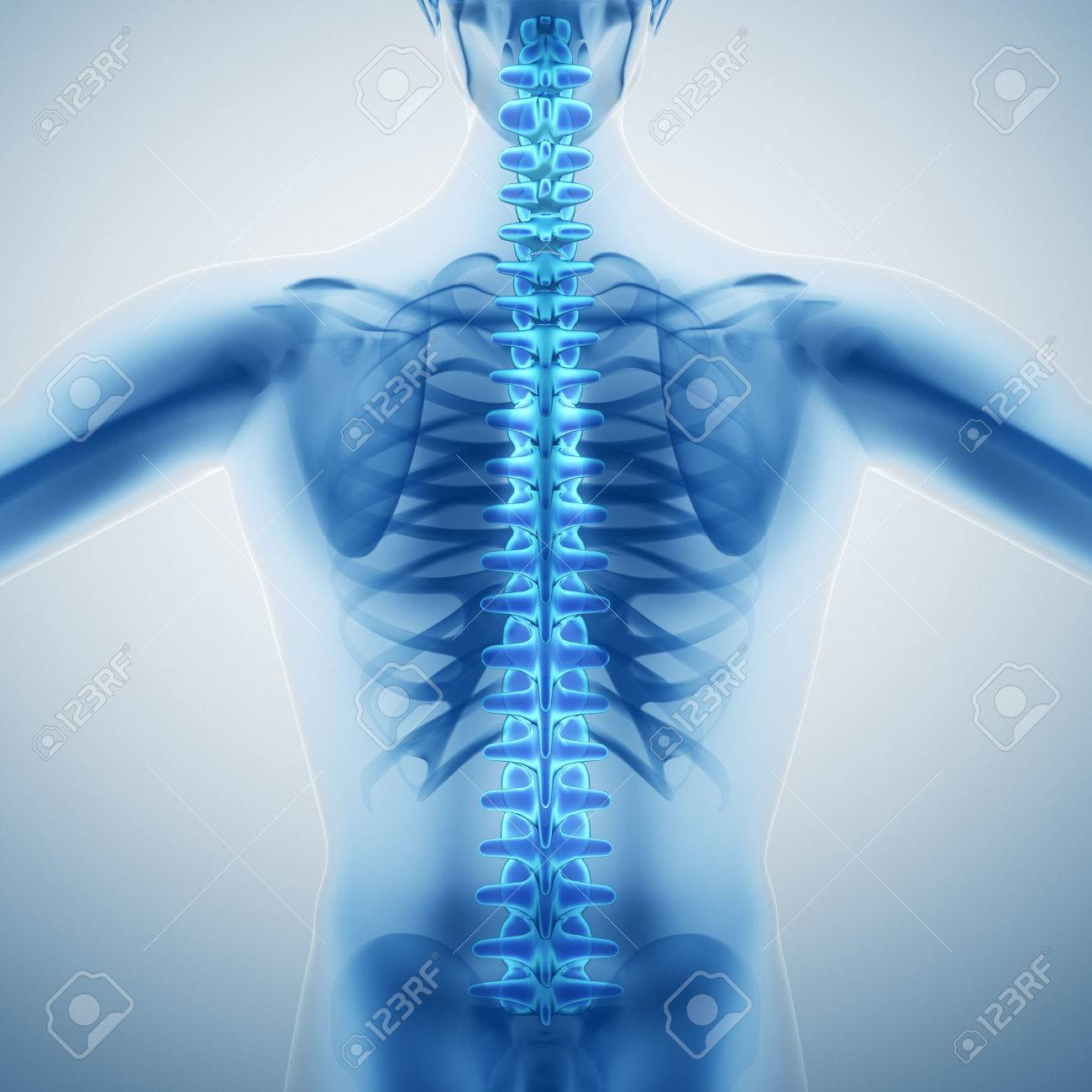 Human Backbone Stock Photo Picture And Royalty Free Image Image
