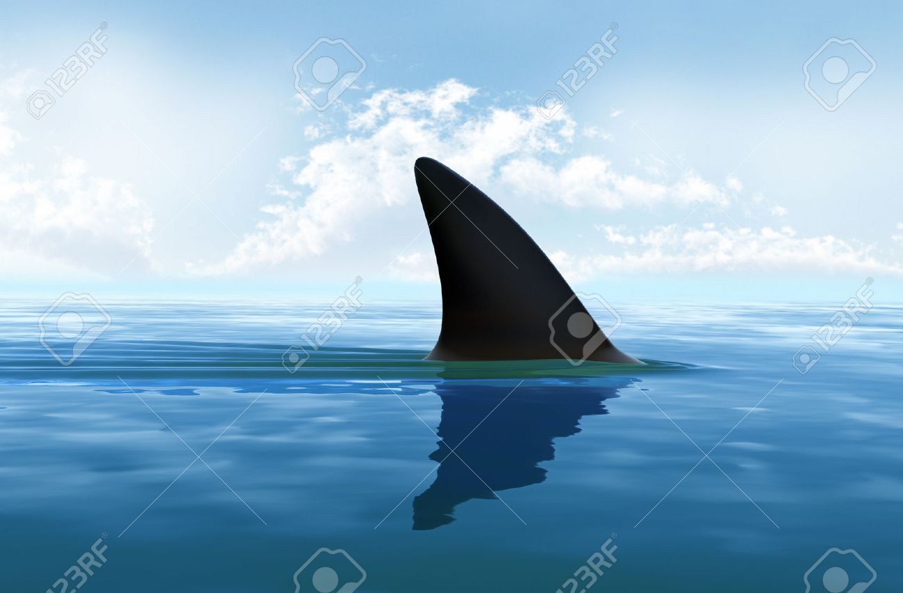 shark fin above water stock photo picture and royalty free image