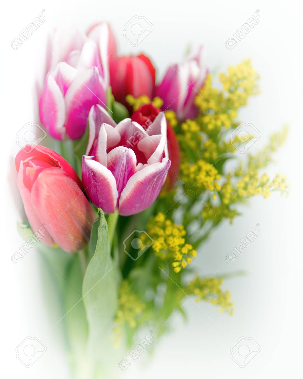 Spring Flowers Bouquet Isolated Lizenzfreie Fotos Bilder Und Stock
