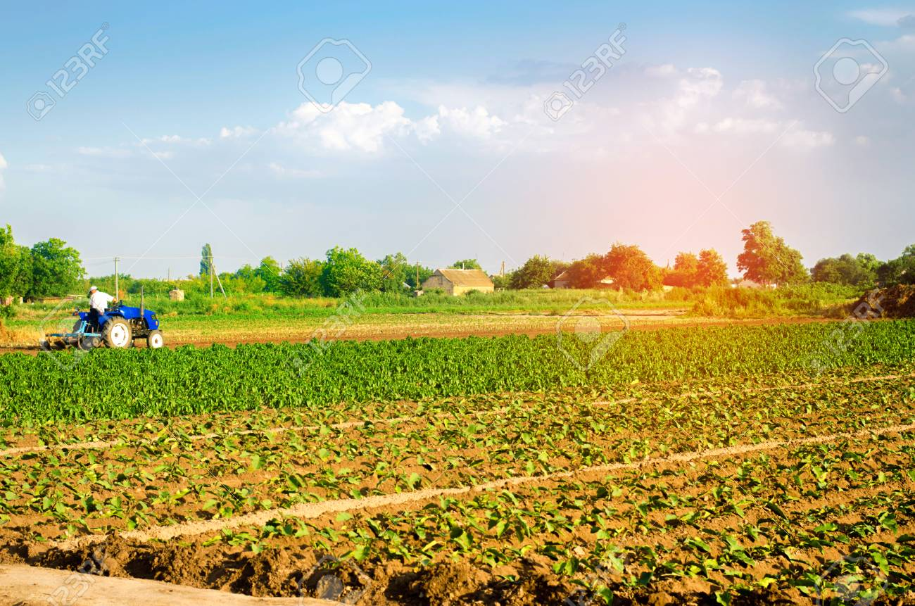 The farmer cultivates the field with a tractor  Agriculture,