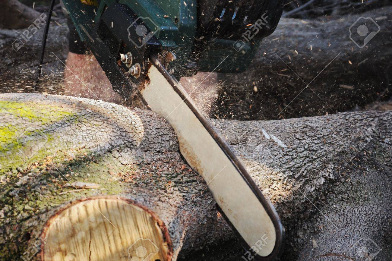 Closeup to working chainsaw of electric power saw in motion cutting large log with sawdust flying around Stock Photo - 12404953