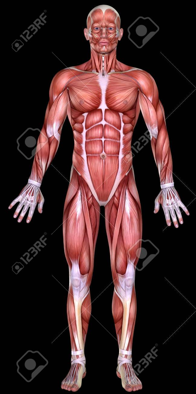 3d Male Body Anatomy Isolated On Black Stock Photo Picture And