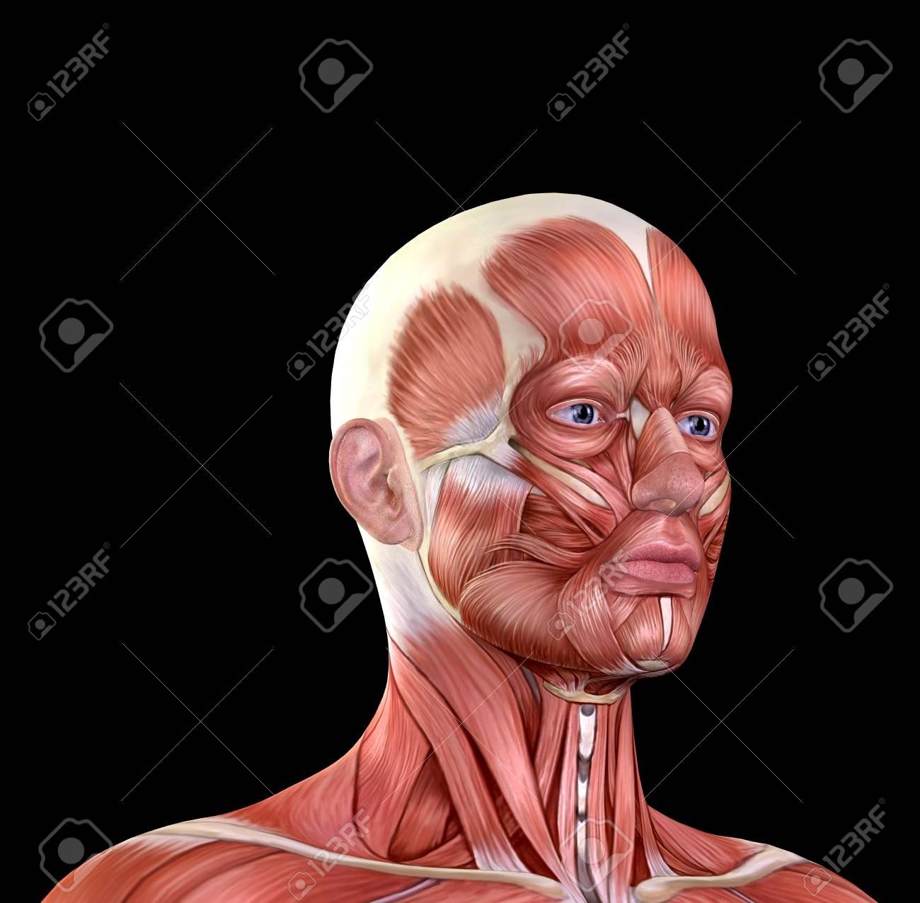 Männliches Gesicht Muskeln Anatomie Isoliert Auf Schwarz Lizenzfreie ...