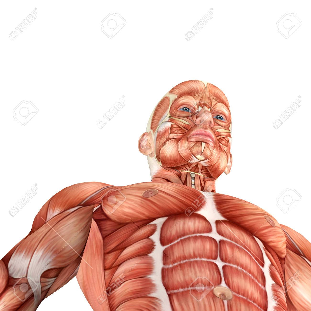 3d Male Anatomy Bottom View Stock Photo, Picture And Royalty Free ...