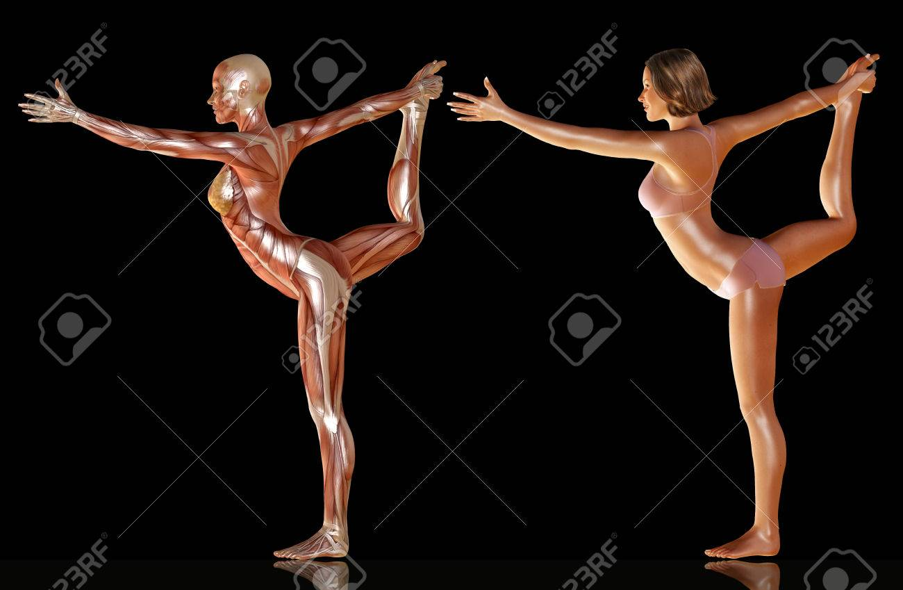 3d Render Of Woman Body With Muscle Anatomy Doing Yoga Illustration ...