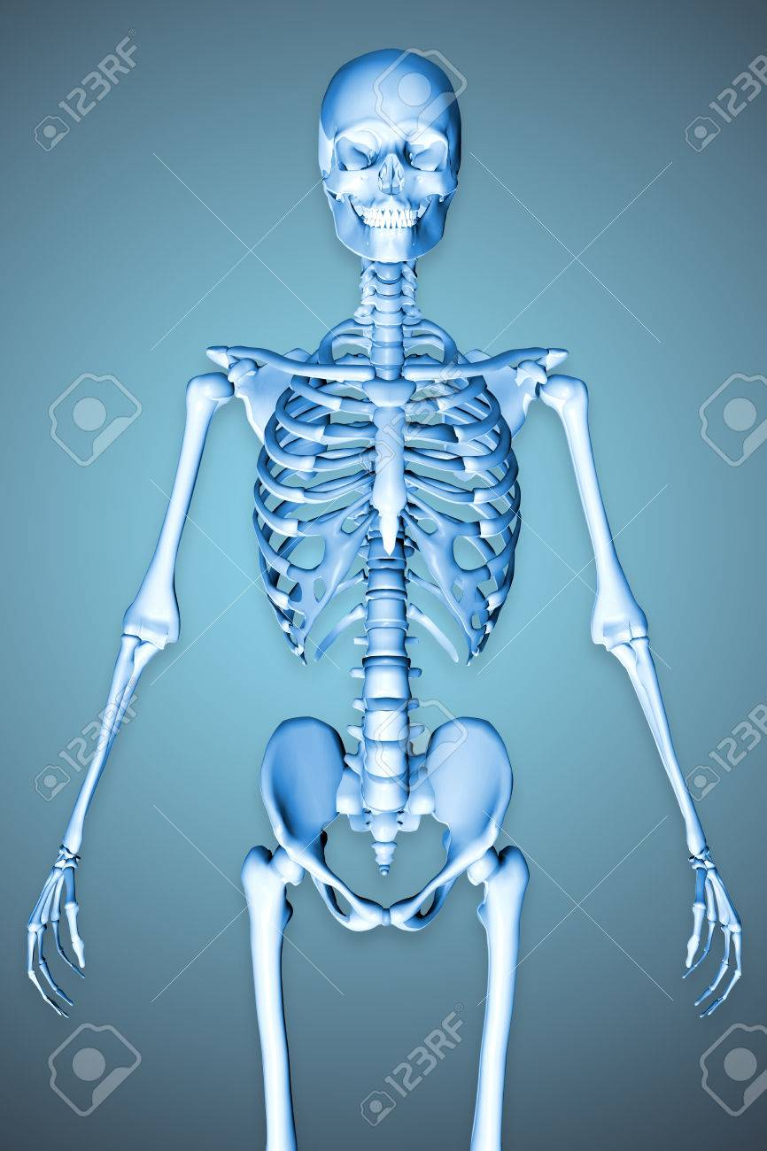 3d Rindi La Ilustracin De Un Hombre Esqueleto Que Muestra El Torso