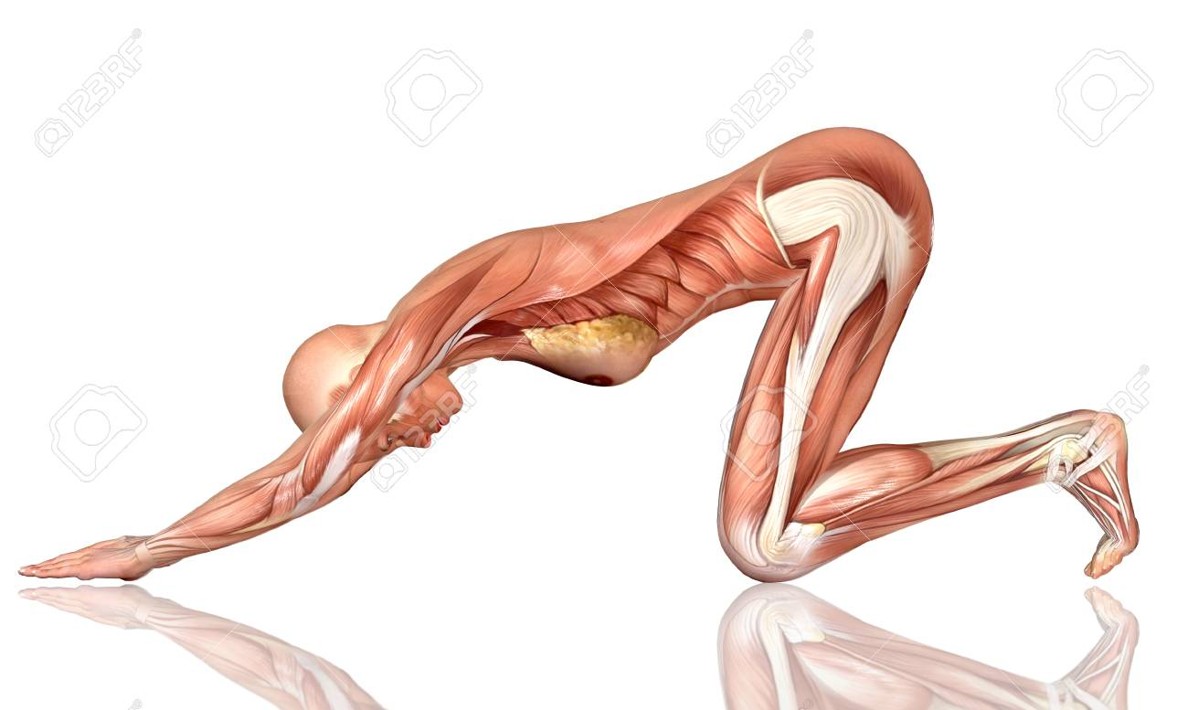 3D Female Medical Figure In Yoga Pose Stock Photo, Picture And ...