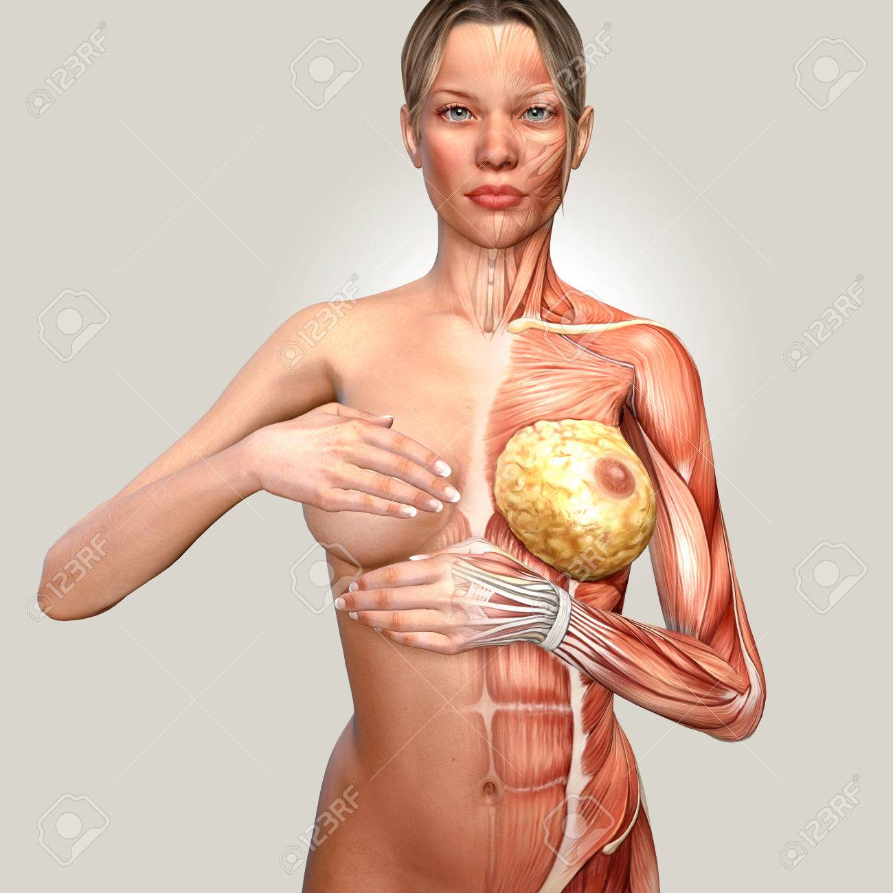 3d Illustration Of A Woman Anatomy Controlling Her Breast Stock ...