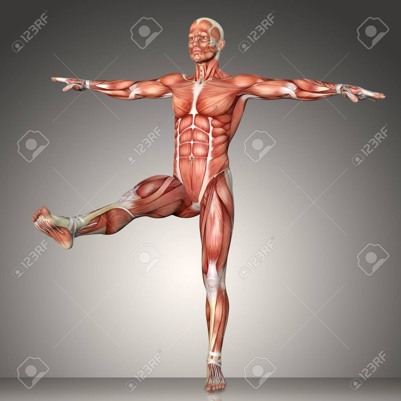 3d Rendering Of A Male Anatomy Figure In Exercise Pose Stock Photo