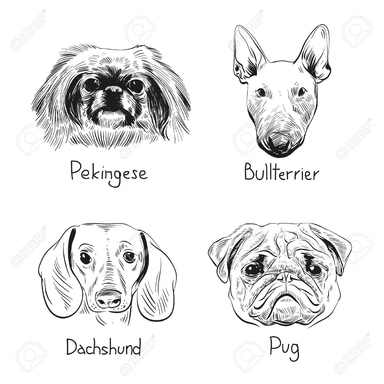 Set Of Hand Drawn Dogs Vector Illustration