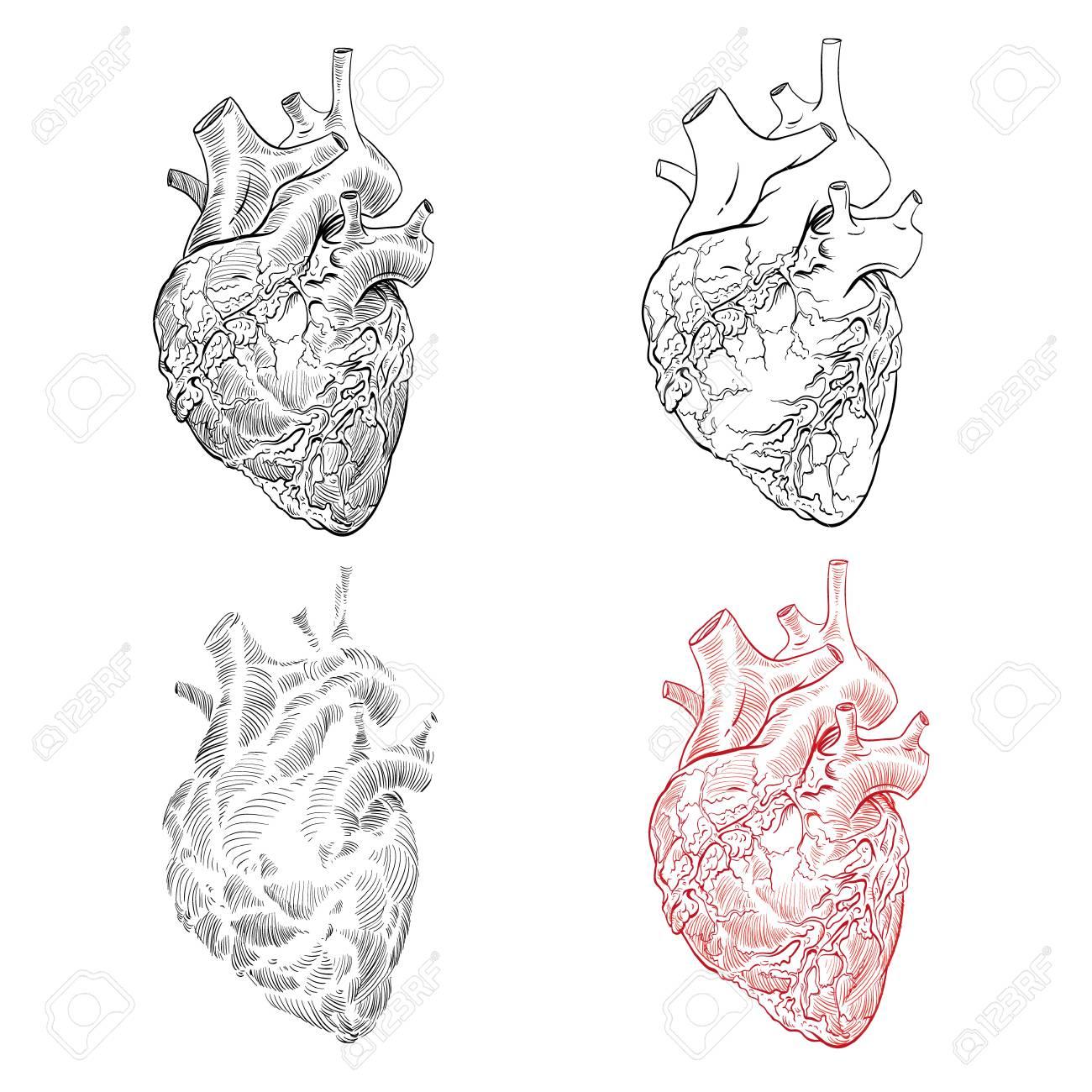 Wunderbar Menschliche Anatomie Skizzen Ideen - Anatomie Ideen ...