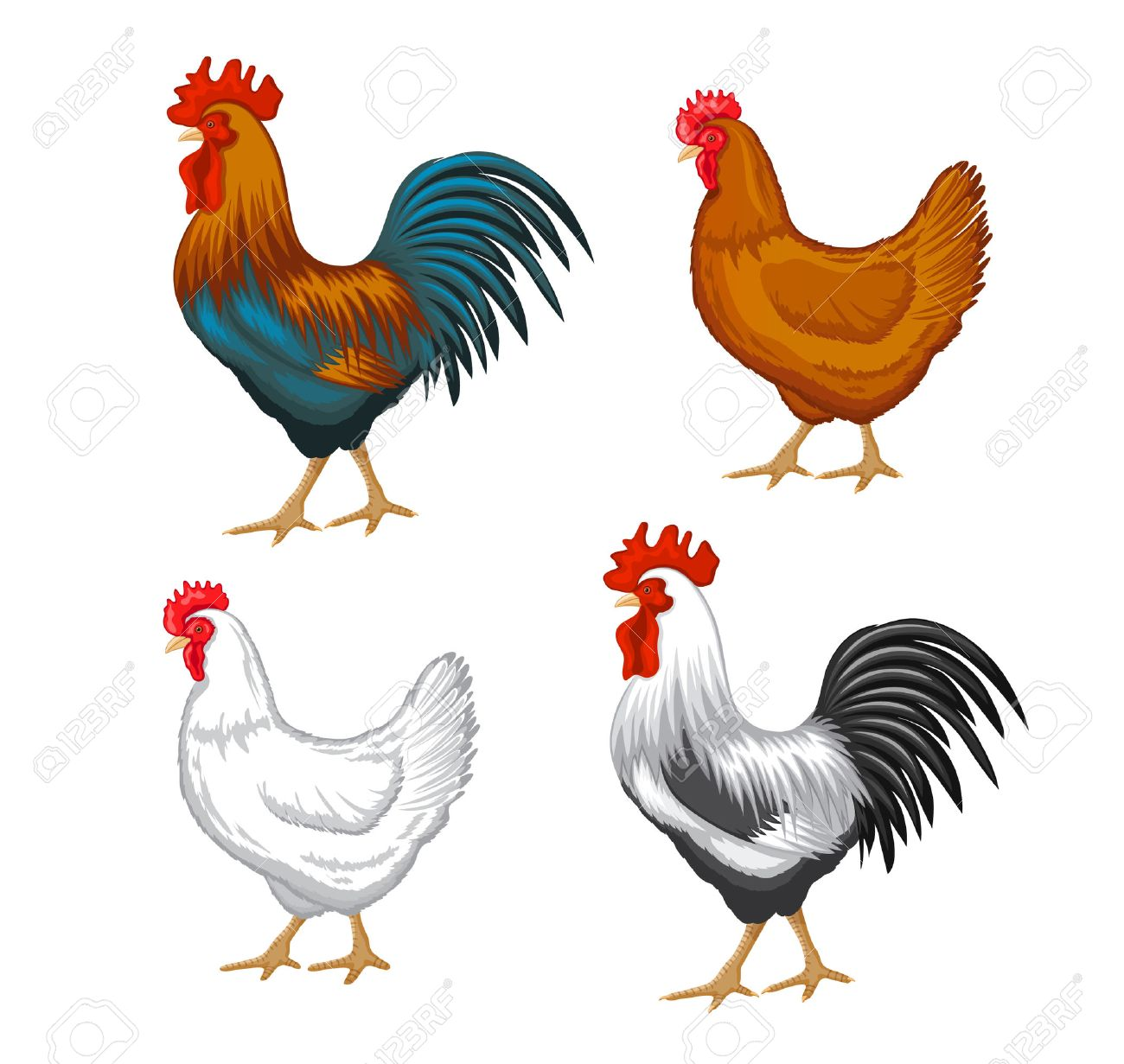 chickens set vector illustration in color brown and white hen