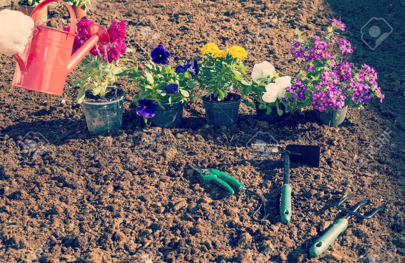 Vorbereitung Blumen Im Garten Im Frühjahr Gepflanzt Werden