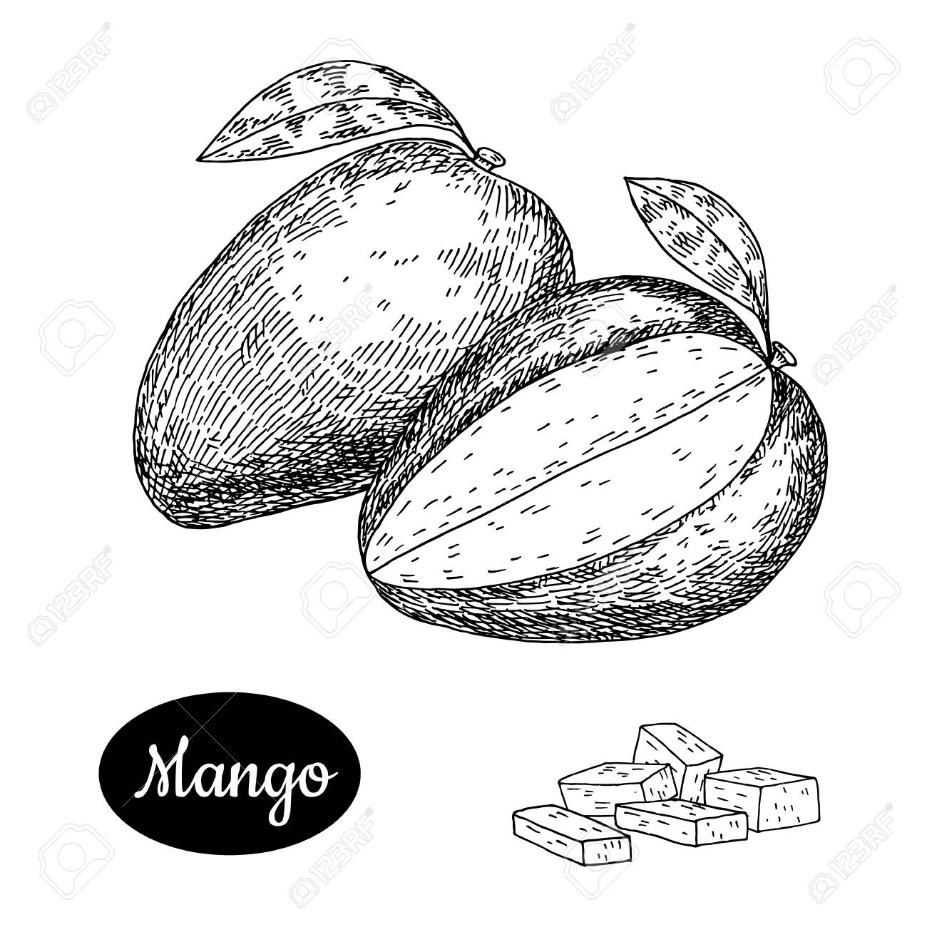 Fresh mango hand drawn sketch style tropical summer fruit vector illustration isolated drawing on