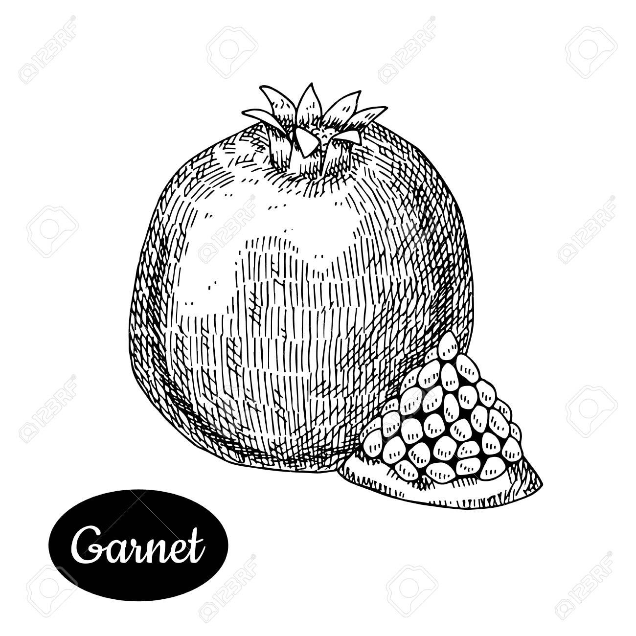 Granada Fresca Esboco Desenhado A Mao Ilustracao Tropical Do