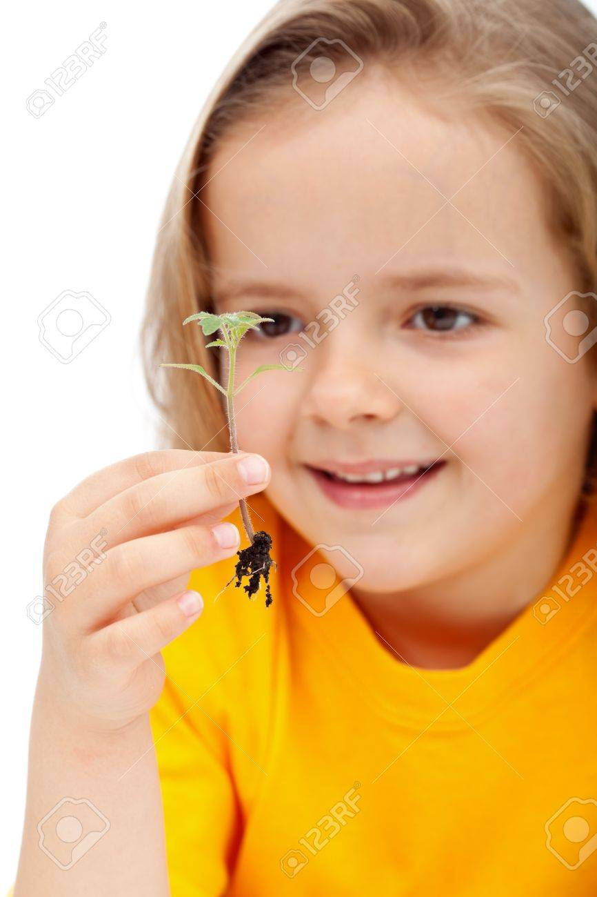 Little girl observing the miracle of life - holding a spring seedling, isolated Stock Photo - 13459797