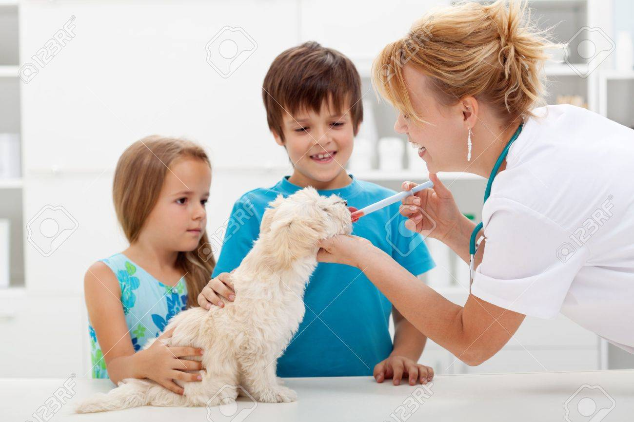 veterinar kid nurse holding dog: Kids with their pet at the veterinary doctor - fluffy dog receiving