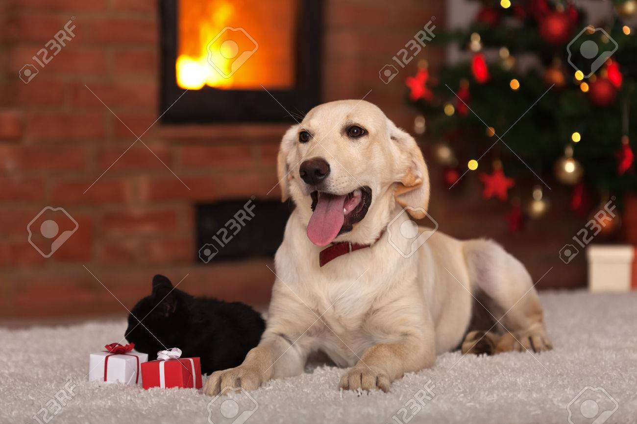 Family pets receiving gifts for Christmas - dog a kitten with small presents - 33240398