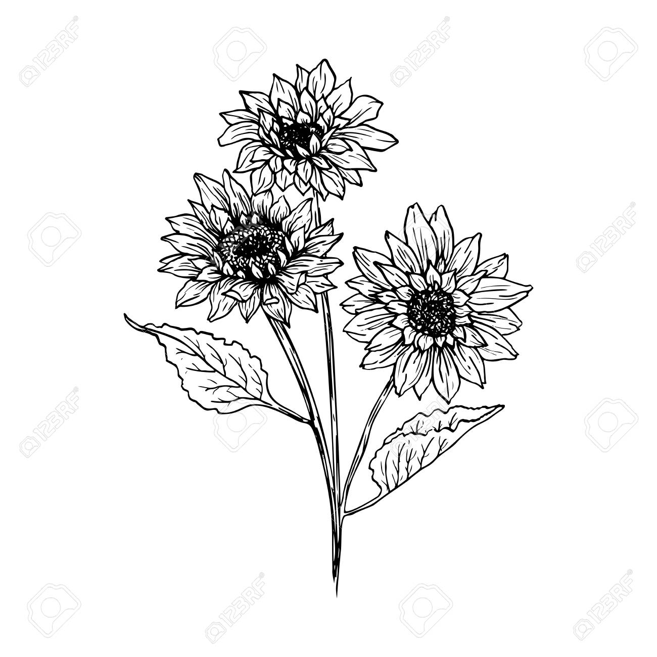 Sunflower hand drawn vector illustration floral ink pen sketch