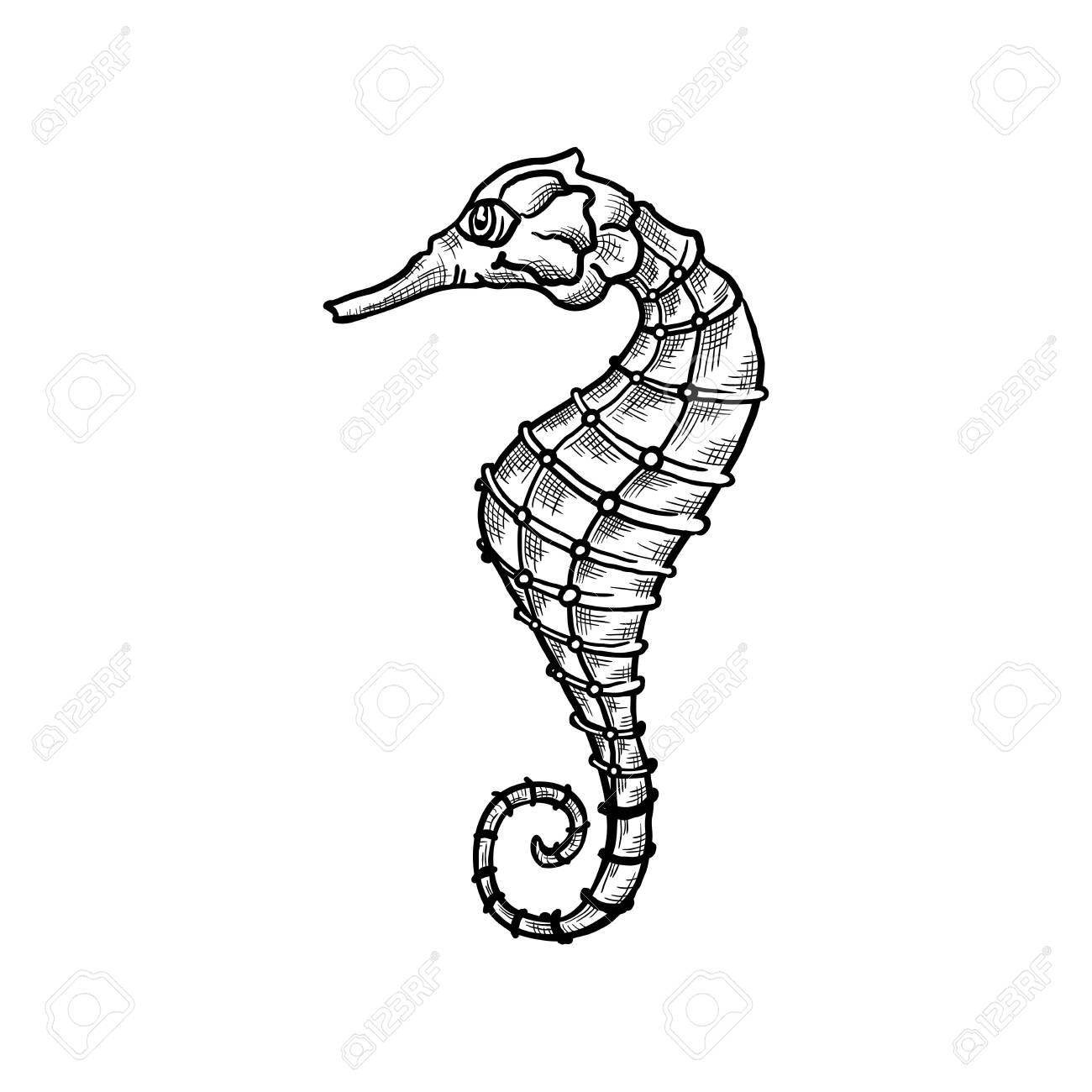 Seahorse Vector Sketch And Thin Line Art Aquatic Animal With Royalty Free Cliparts Vectors And Stock Illustration Image 140750439