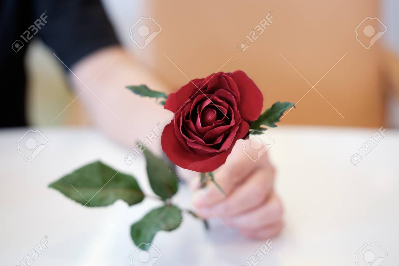 Handing a red rose as a representation and a symbol of love handing a red rose as a representation and a symbol of love af point selection buycottarizona