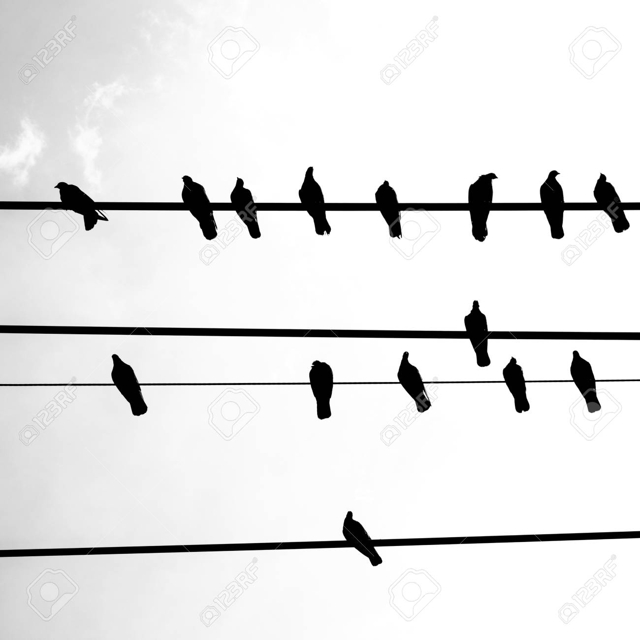 A Silhouette Of Birds On A Telephone Wire. Stock Photo, Picture And ...