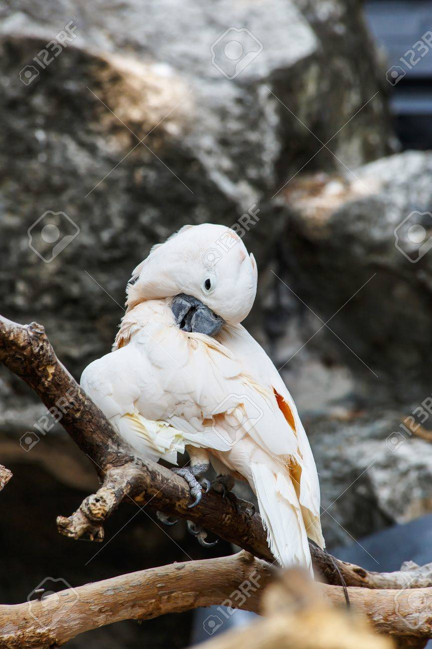 Pink And White Cockatiel Bird