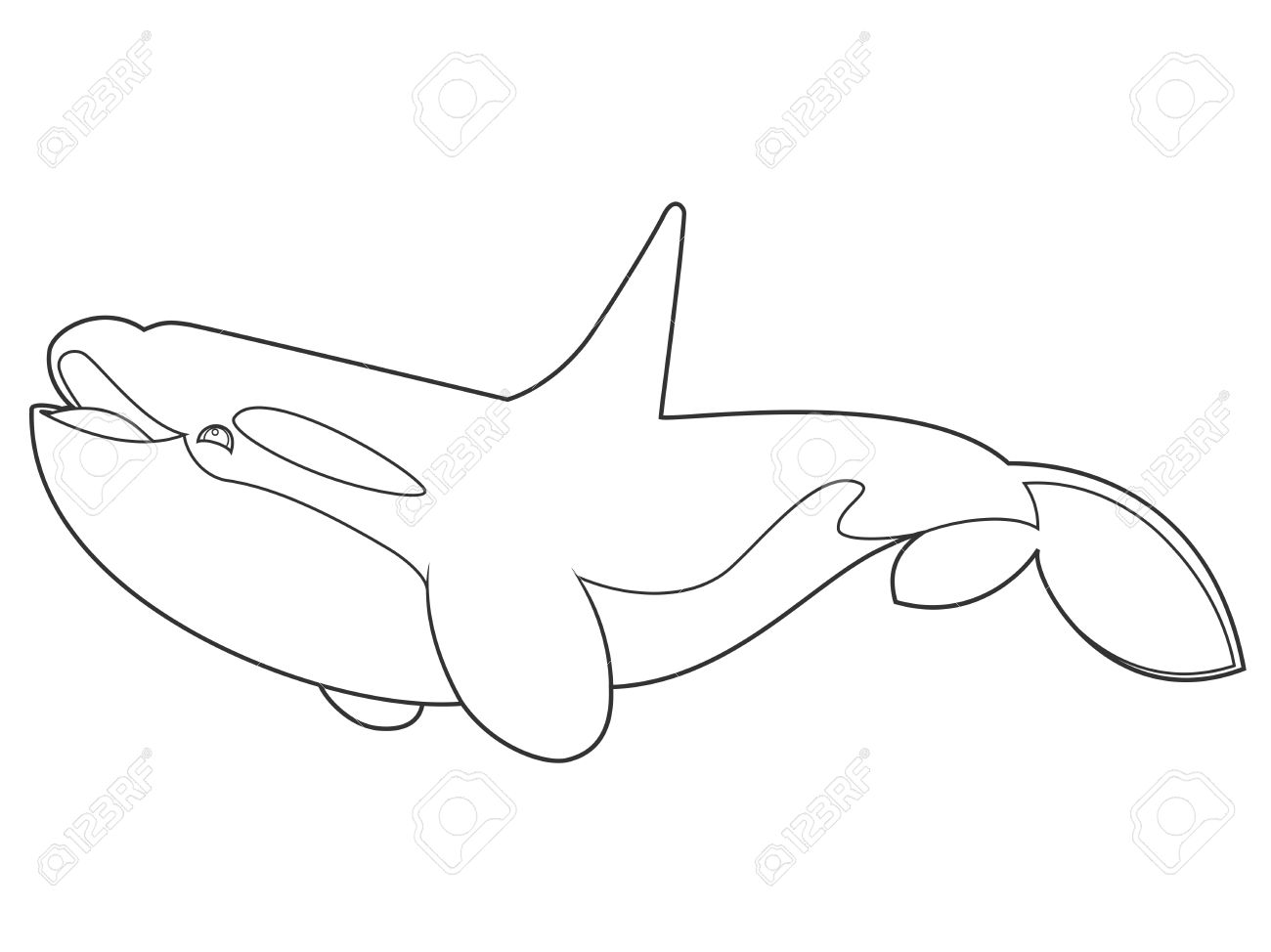 illustration of a killer whale on white background with black