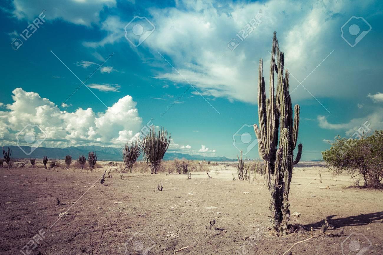 big cactuses in red desert, tatacoa desert, columbia, latin america, clouds and sand, red sand in desert - 51416762
