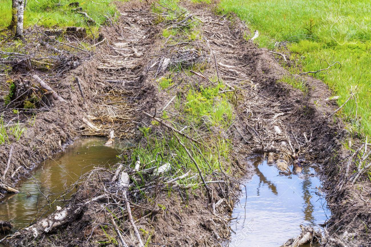 rutted forest road in summer stock photo picture and royalty free