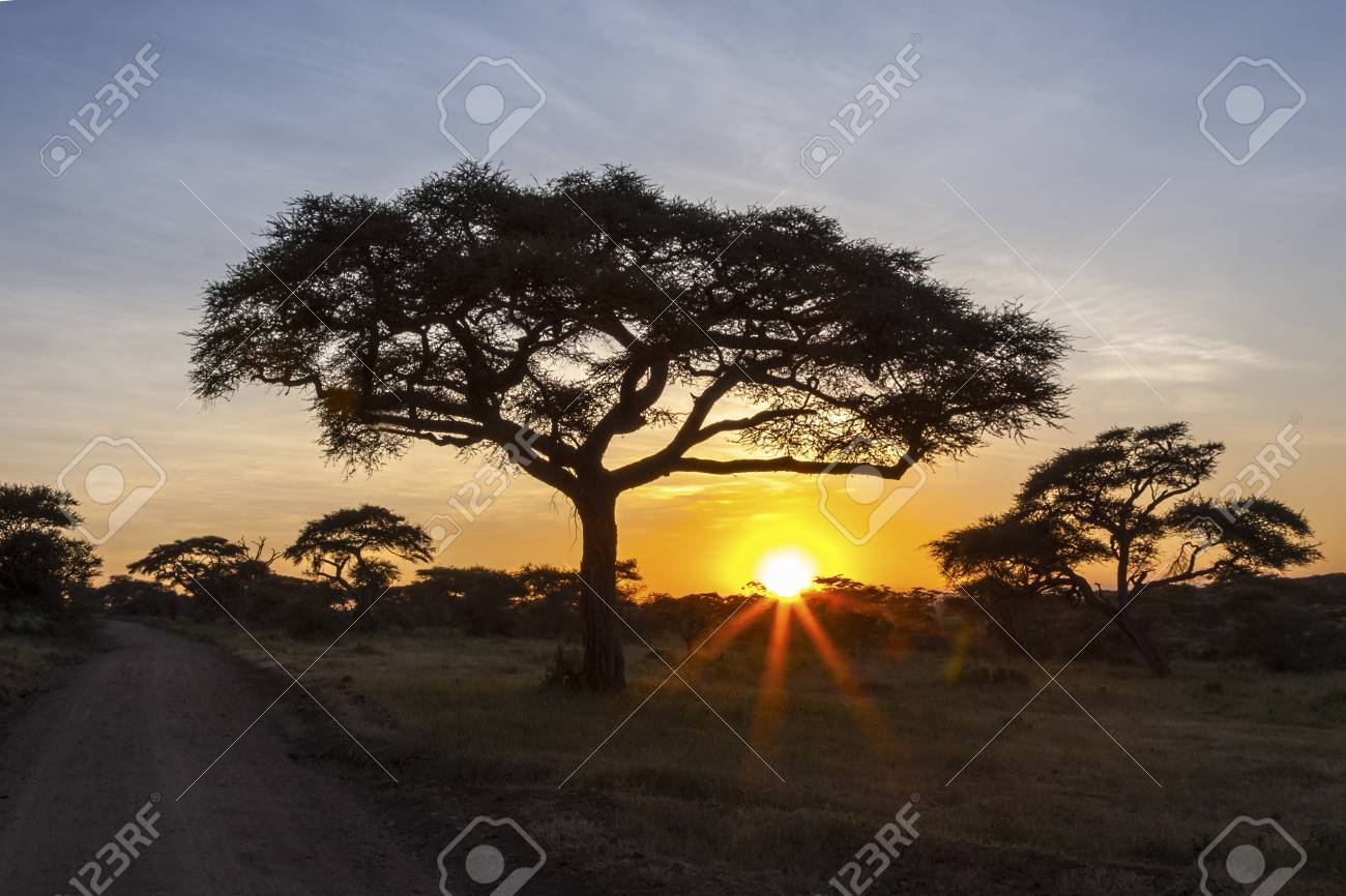 Sunset At Serengeti National Park Stock Photo - 20402509