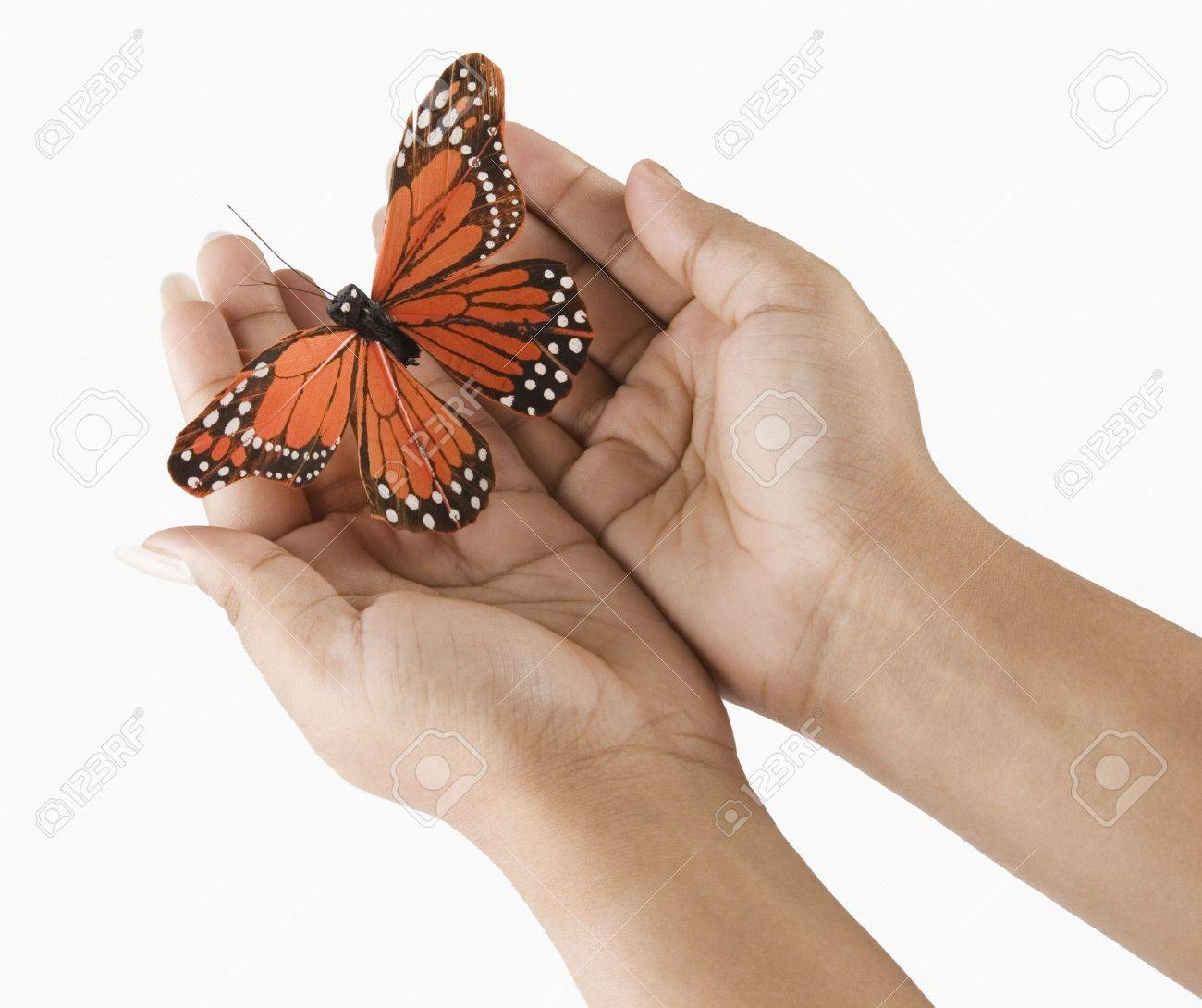 Woman's hands holding a butterfly Stock Photo - 10219850
