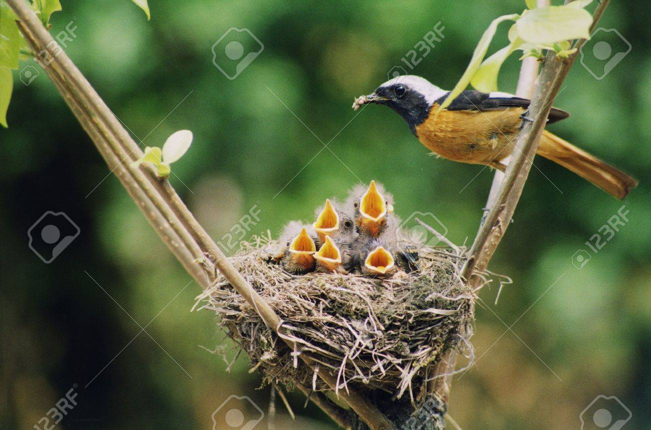 Birds - 11879278