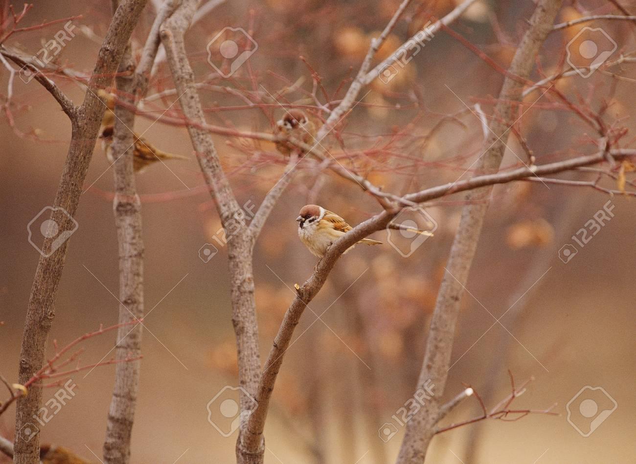 Bird Stock Photo - 11875088