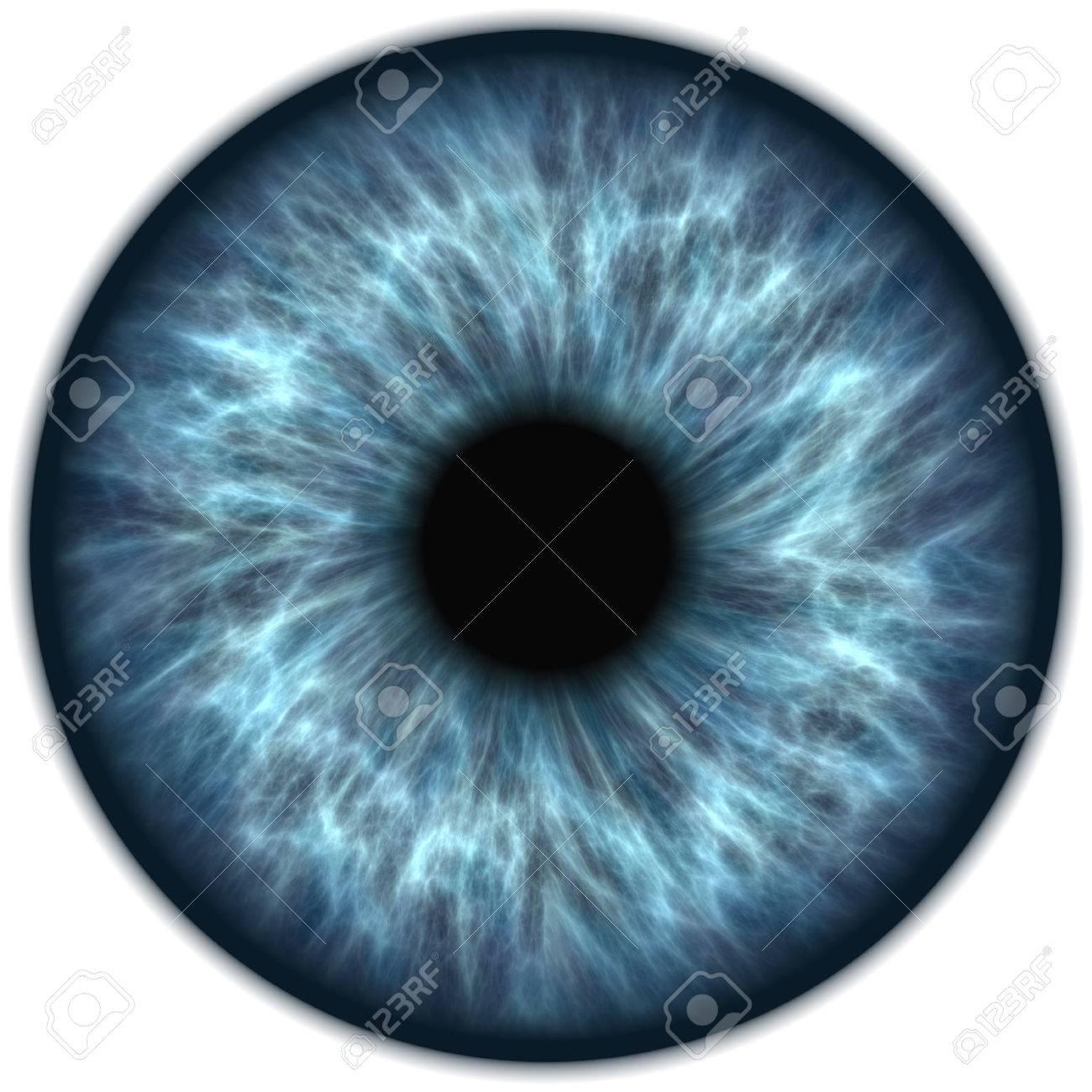 blue iris - 50532184