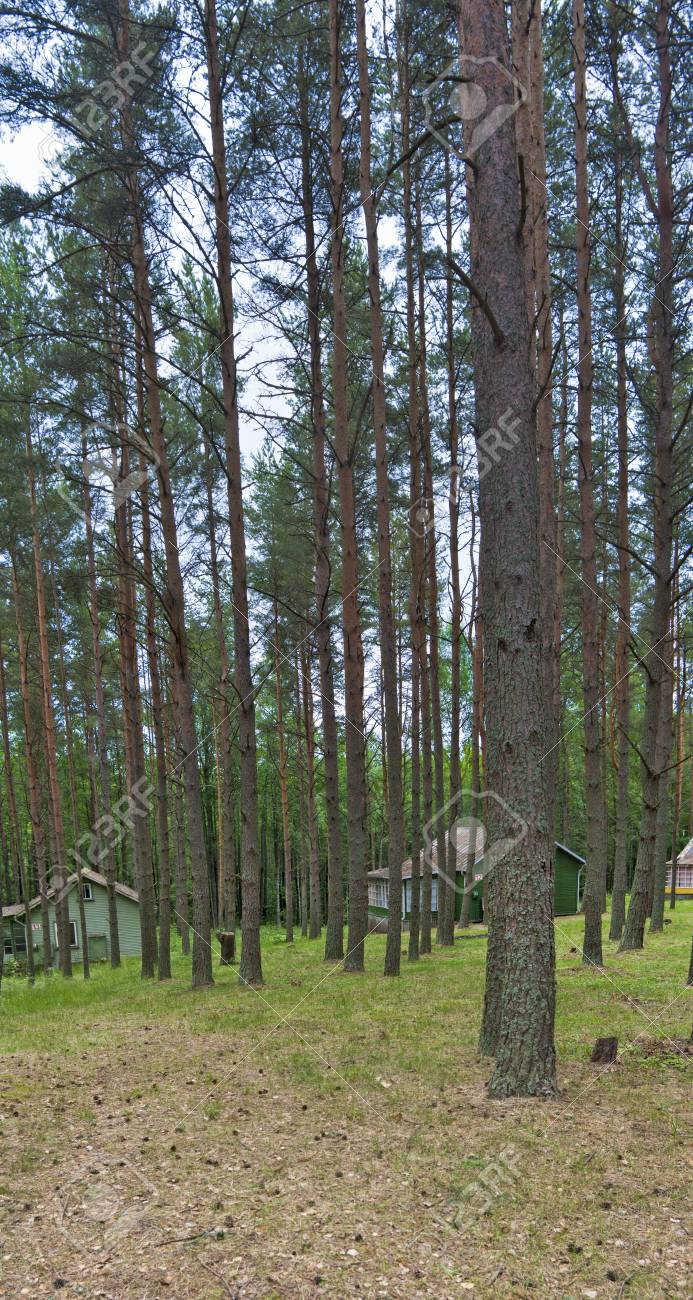 Vacation spot. Small summer houses in pine wood Stock Photo - 7850035