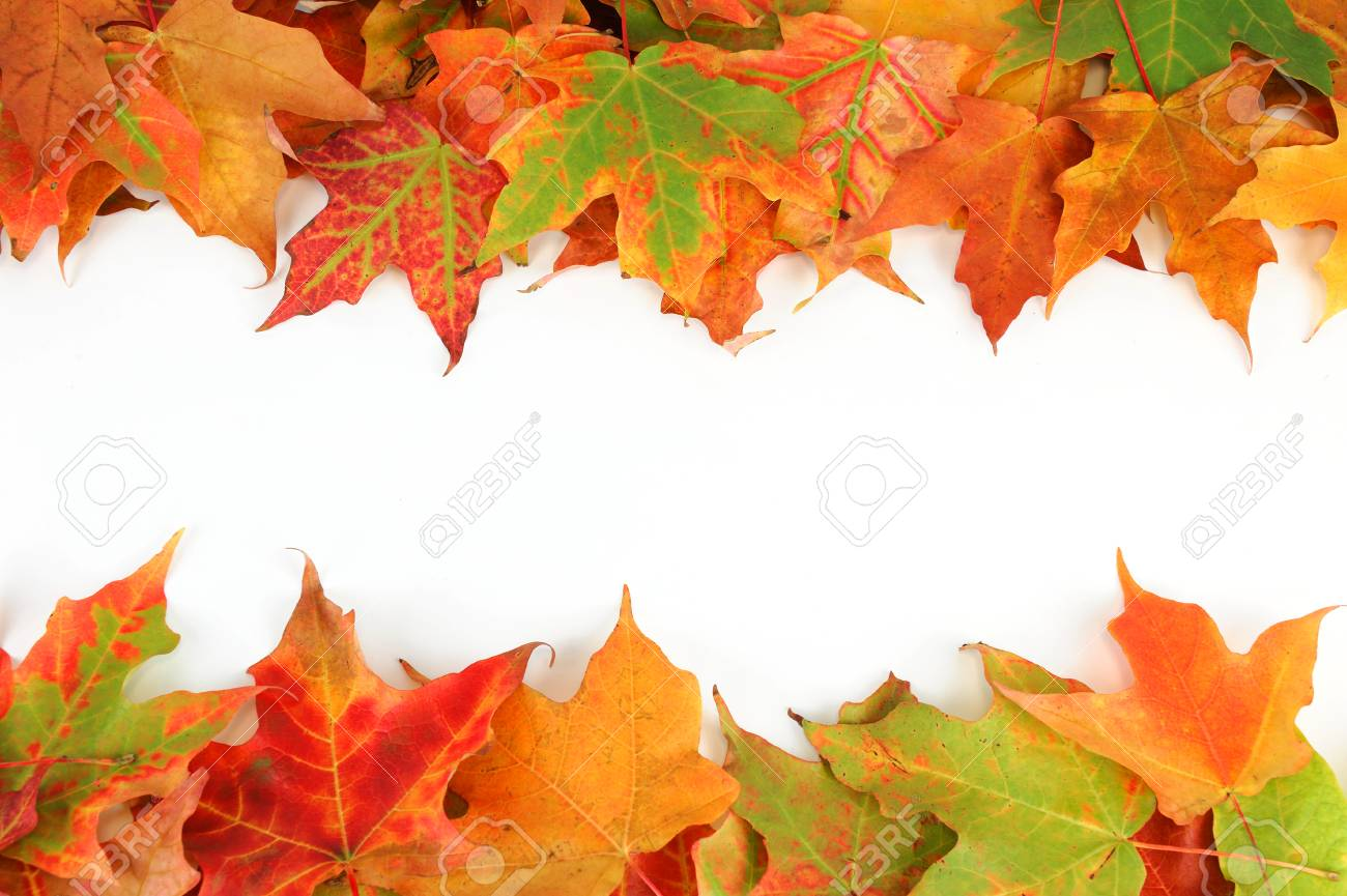 Colorful Autumn Maple Leaves Frame Isolated On White Background ...