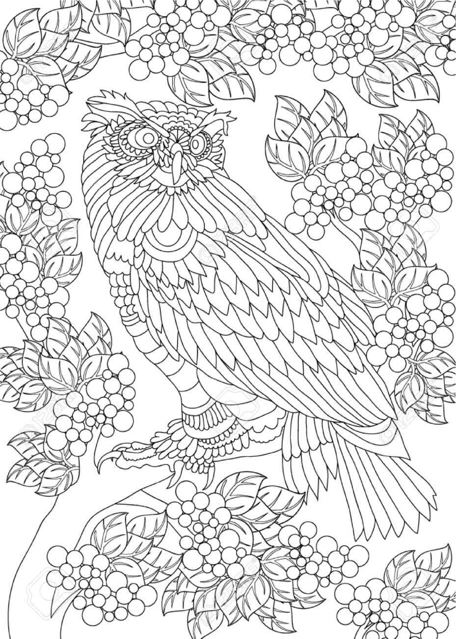 Hand Drawn Bird Coloring Page Royalty Free Cliparts, Vectors, And ...