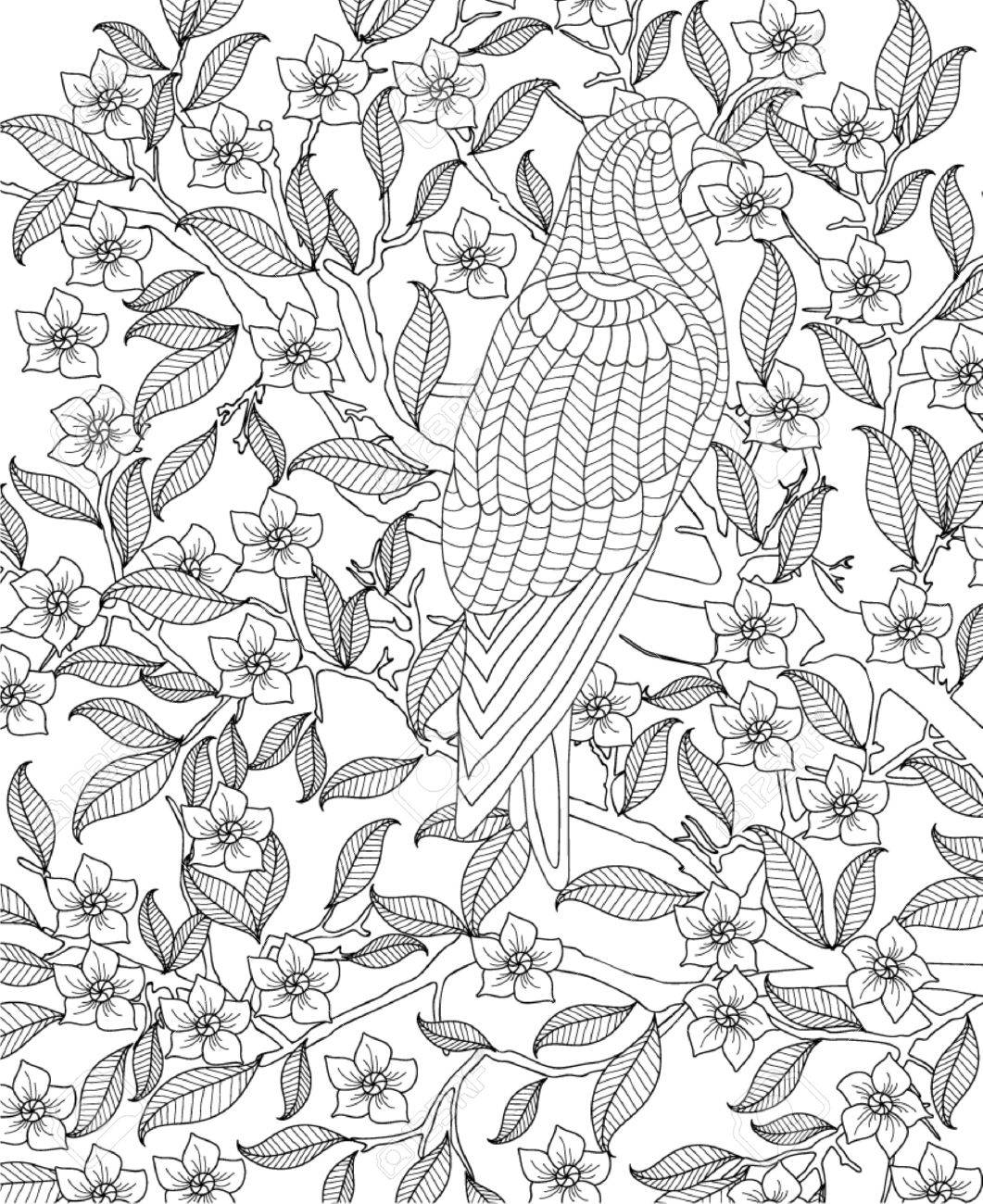 Hand Drawn Bird Coloring Page Royalty Free Cliparts Vectors And