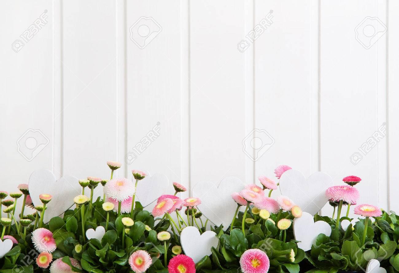 Daisy fleurs de printemps rose sur fond de bois blanc pour articles de décoration. Banque d'images - 51470989