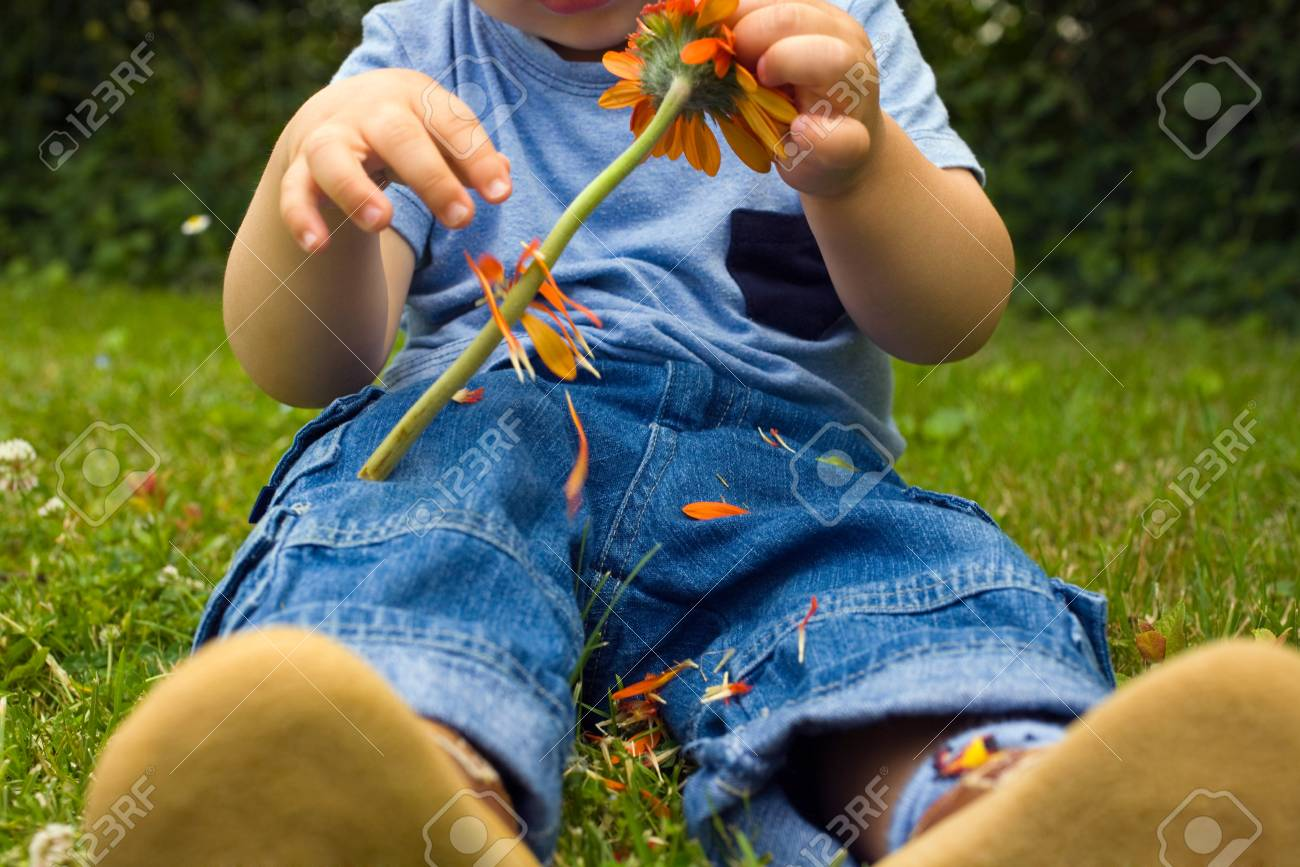 Baby Boy Picking Petals Off A Flower Stock Photo, Picture And ...