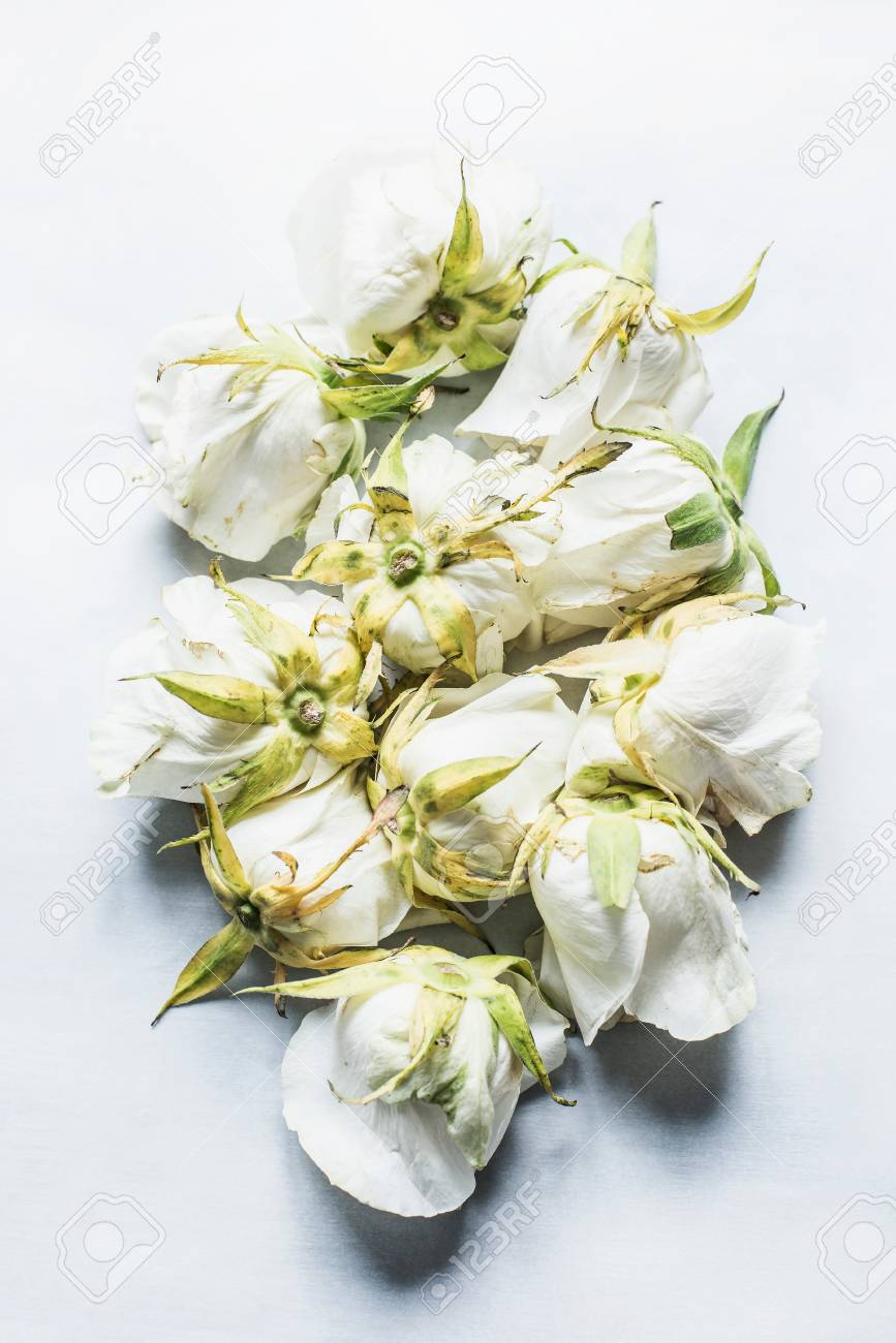 White Rose Heads Arranged Upside Down Elevated View Stock Photo